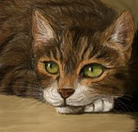 Cat speedpaint practice by Amadare90