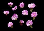 Flowers 1 Amaranta.G