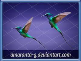 Hummingbird-Amaranta.G
