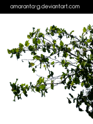 Branches-Amaranta.G