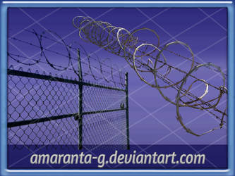Wire fence-Amaranta.G
