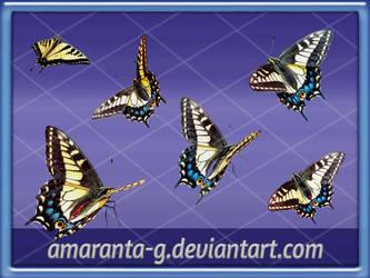 Butterflies-Amaranta.G
