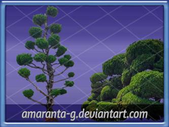 Arboles-Amaranta.G