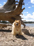 Biscuit at Crystal Lake 2010 by styx-leagon