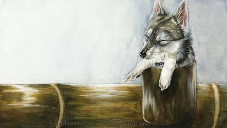 Piper Fox