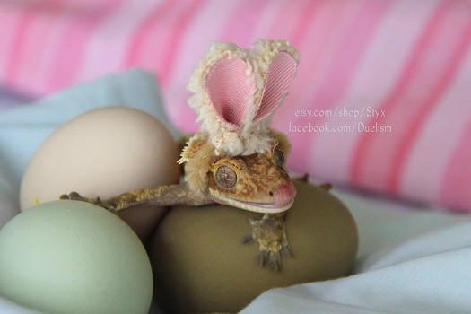 Easter Gecko 2017