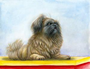 Paisley the Pekingese pet portrait.