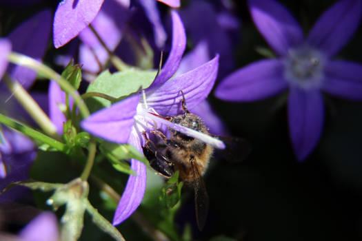 Furry Bee Too