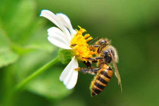 Work like a bee