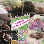 Critter Spotting ! GNS Nov 2020 Prompt