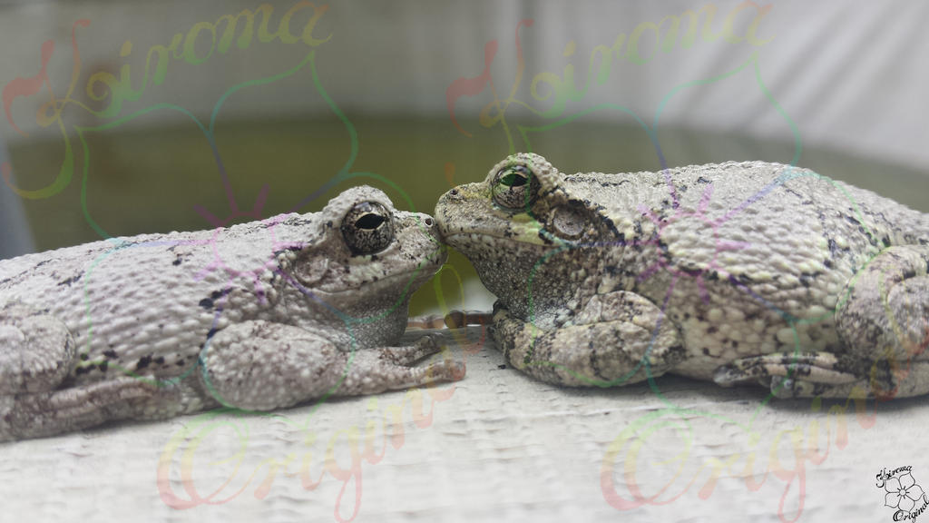 Kissing Frogs 6 by Kiroma