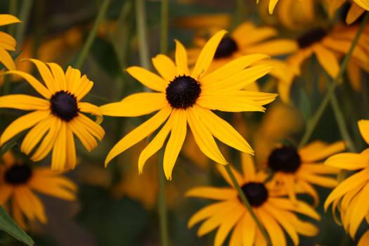 Yellow. (no editing.)