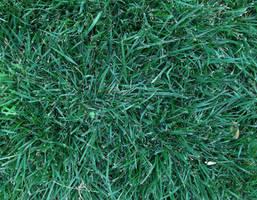 Grass by alytre