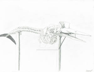 Skeleton of the Sperm Whale