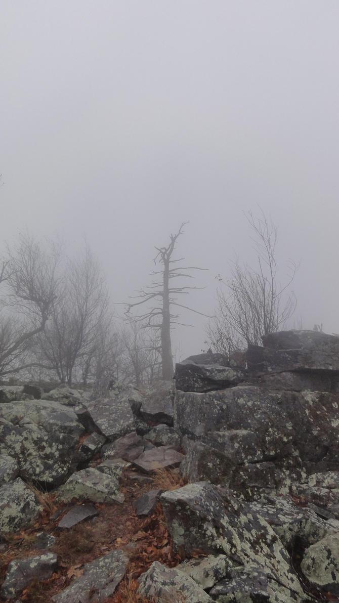 the dead tree by MySocksRock