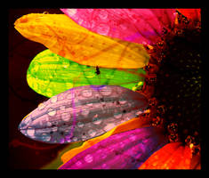 Sunflower Sunflower by jesidangerously