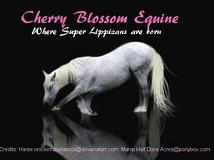 Made for Cherry Blossom Equine