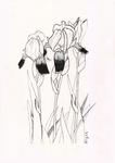 Sketch2-Iris flowers