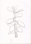 Sketch3-Money tree