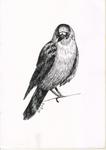 Sketch4-Strange crow