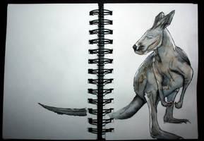 Kangaroo by vodoc