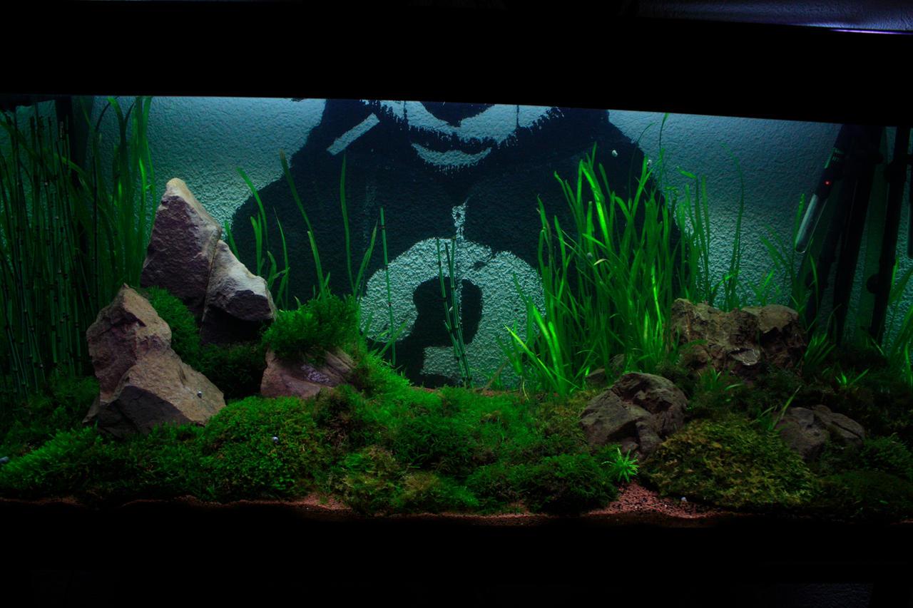350 liter aquarium moss aquascape by vodoc on deviantart for Aquarium 350 litres