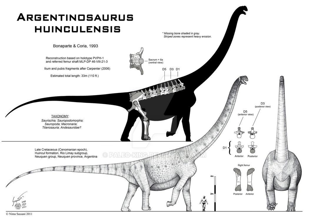 Argentinosaurus huinculensis by Paleo-King