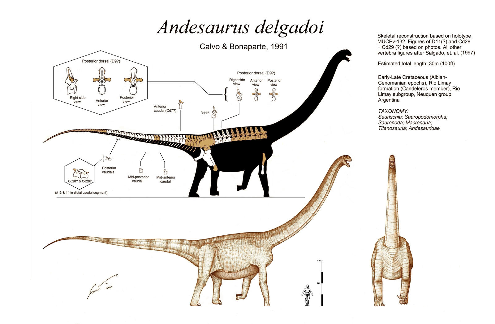 Andesaurus delgadoi by Paleo-King