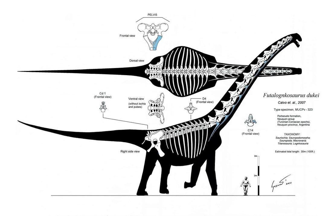 Futalognkosaurus recon Mk. V by Paleo-King