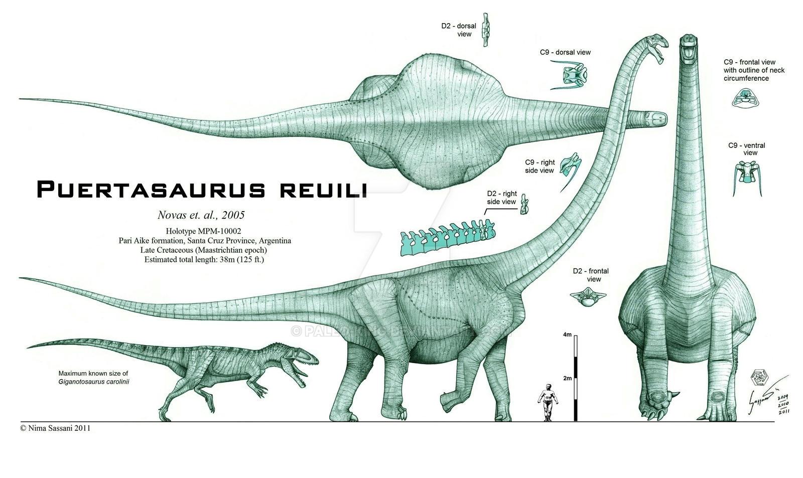 Puertasaurus reuili - REVISED by Paleo-King