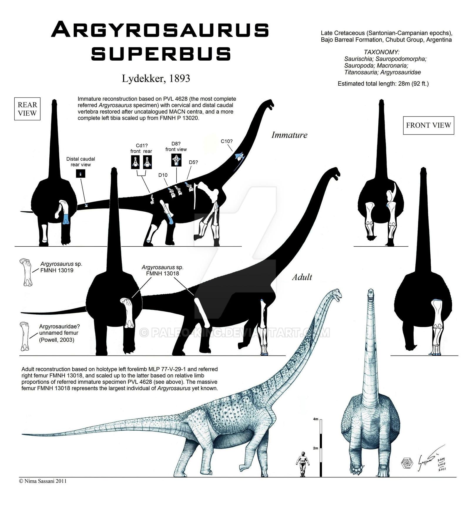 Argyrosaurus superbus by Paleo-King