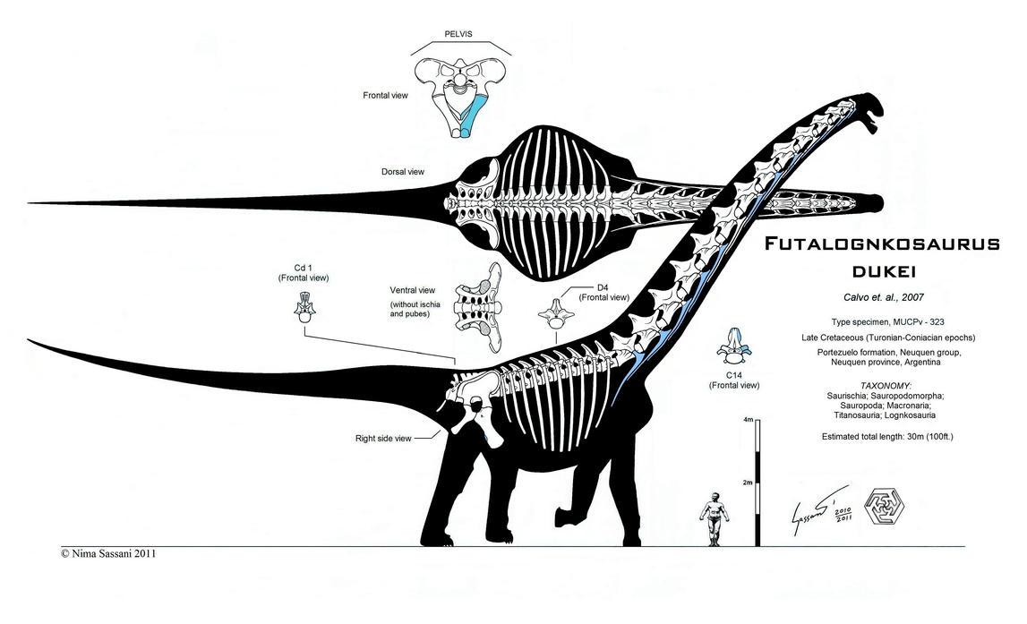 Futalognkosaurus recon Mk. VI by Paleo-King