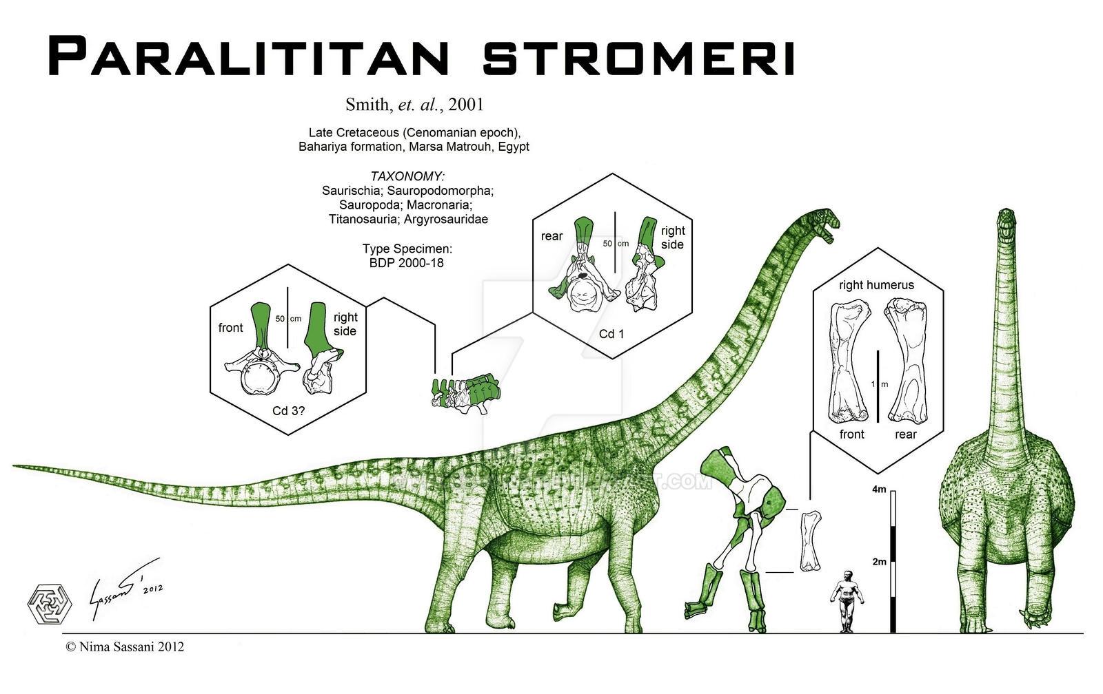 Paralititan stromeri by Paleo-King