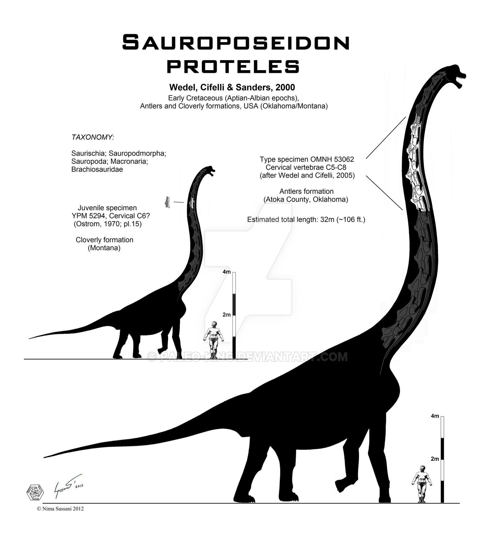 Sauroposeidon proteles skeletal by Paleo-King