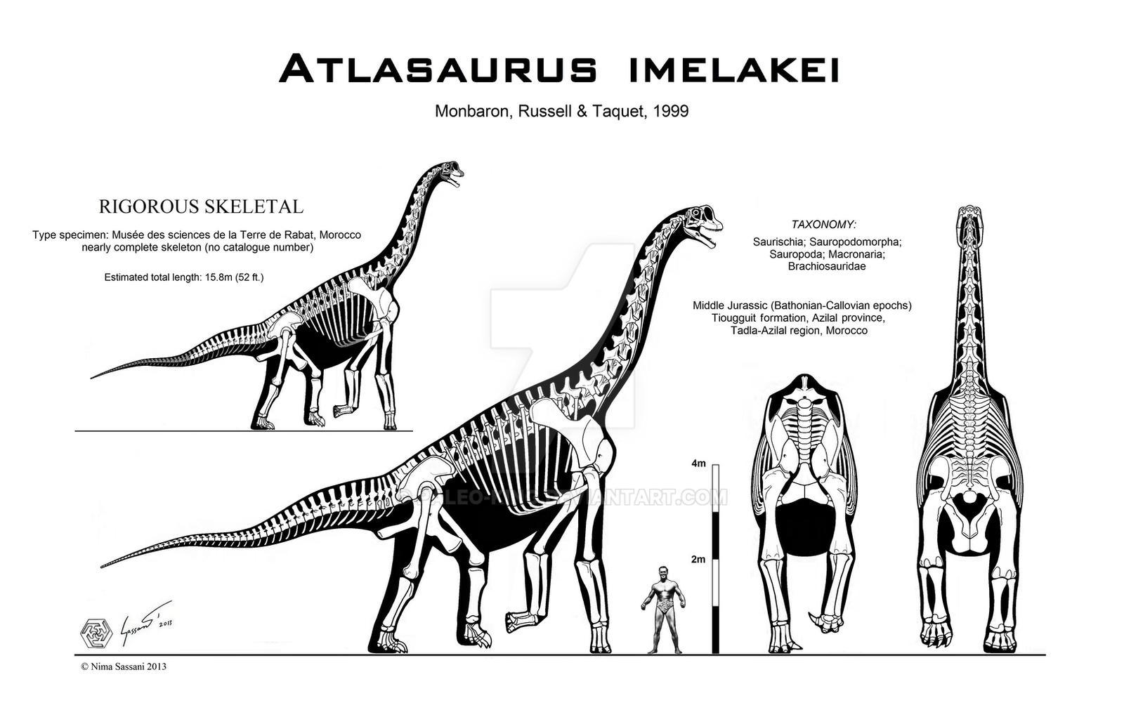 Atlasaurus imelakei skeletal
