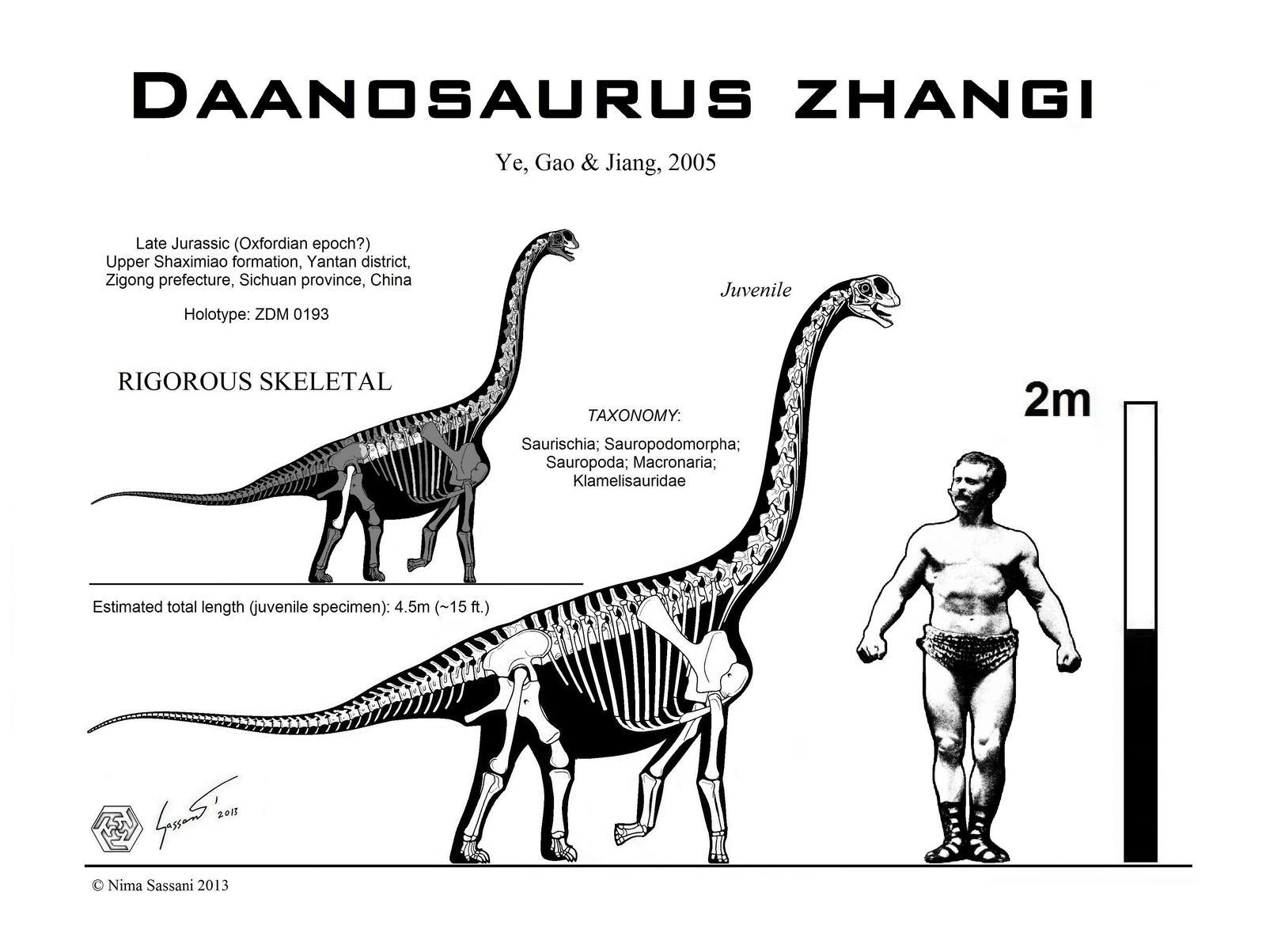 Daanosaurus zhangi skeletal