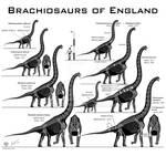 British Brachiosaurs