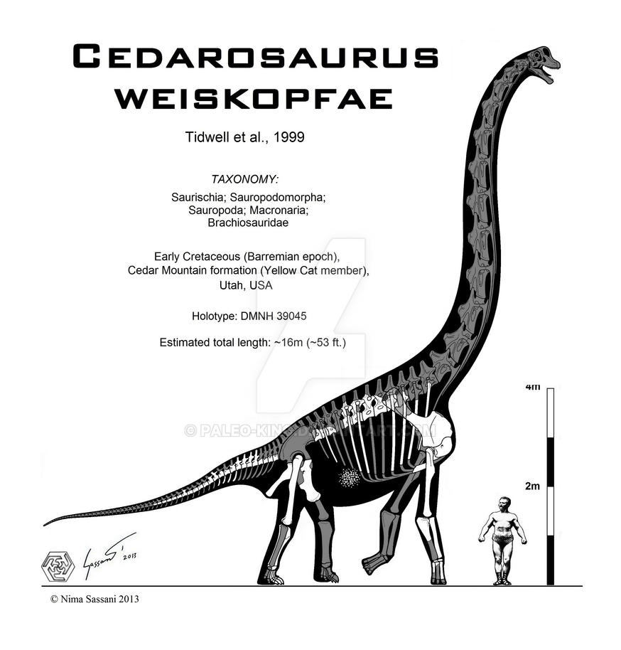 Cedarosaurus weiskopfae by Paleo-King