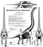 Giraffatitan brancai UNCENSORED!