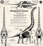 Giraffatitan brancai - Imperial German edition!