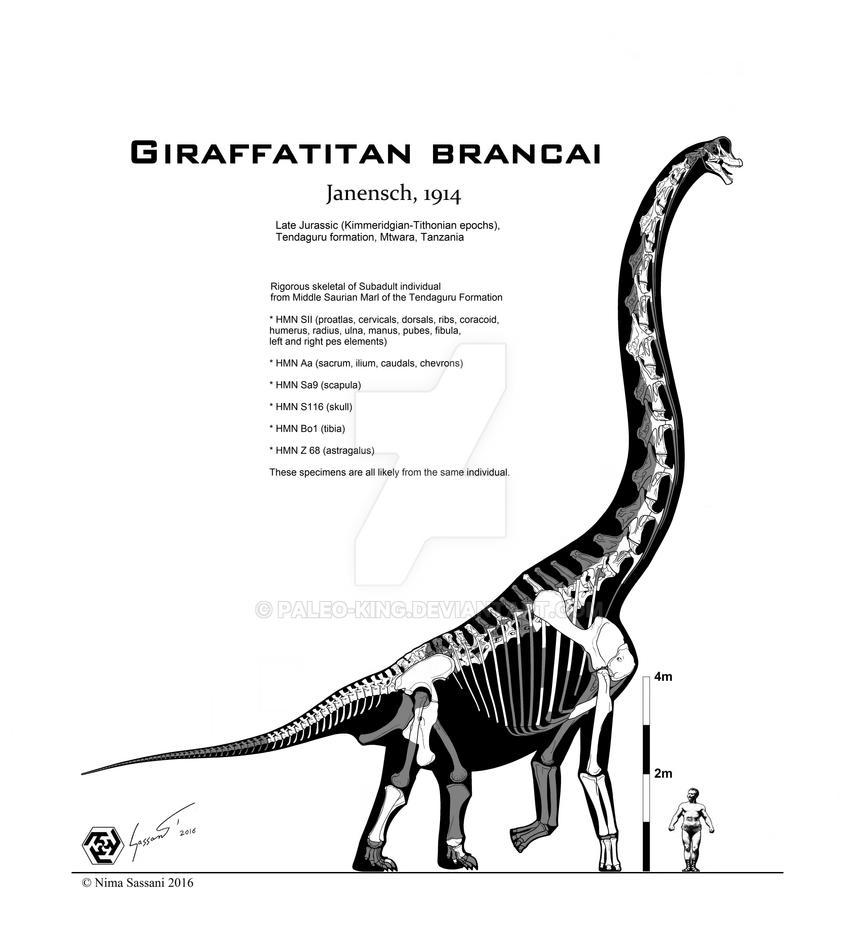 [Image: giraffatitan_brancai_rigorous_skeletal_b...bguvda.jpg]