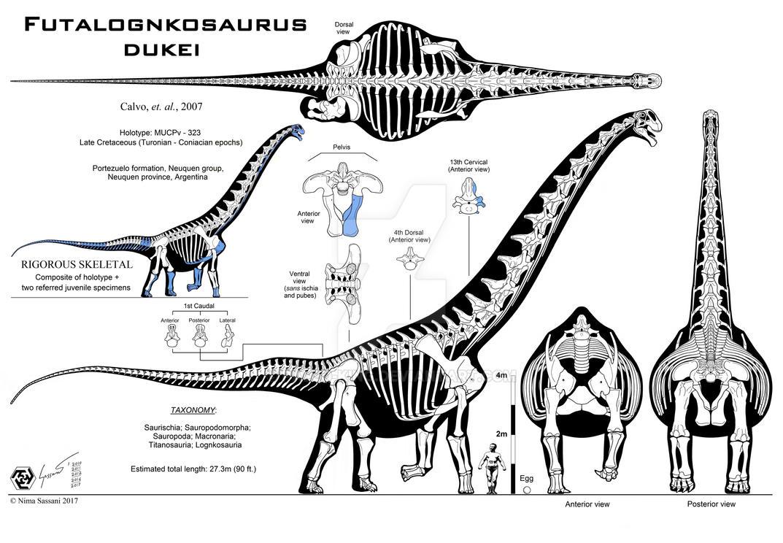 Futalognkosaurus dukei Mk. IX by Paleo-King