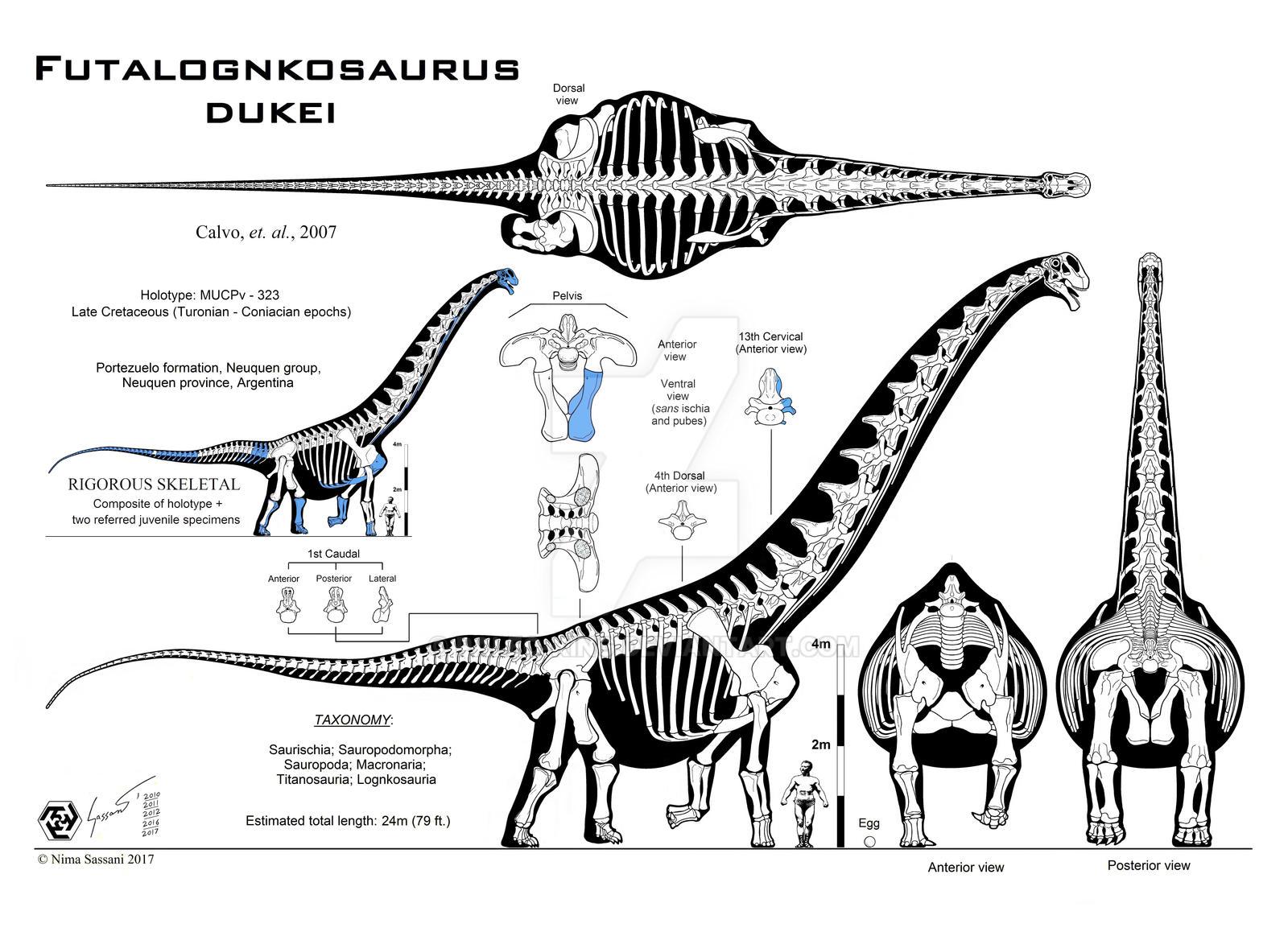 Futalognkosaurus dukei Mk. X (Calvo edition) by Paleo-King