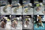 :.Chihuahua - Process.: