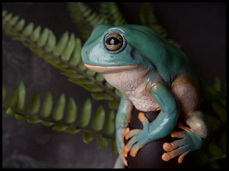 White tree frog - Polymer clay sculpture