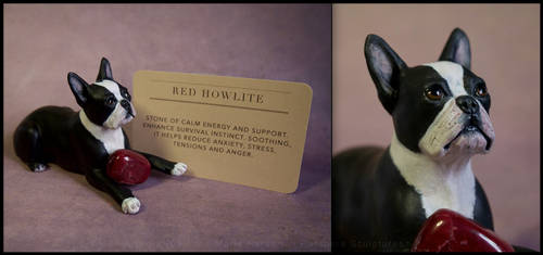 :.Boston Terrier with red Howlite.: