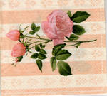 Pink roses with soft backgroun by maf8-stock