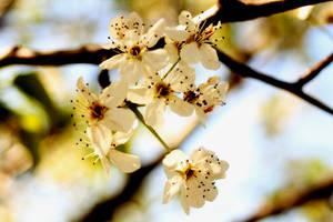 Flower by dyslexaphobia