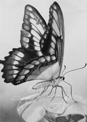 Butterfly by JTrzeciak