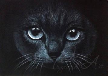 Black cat by JTrzeciak